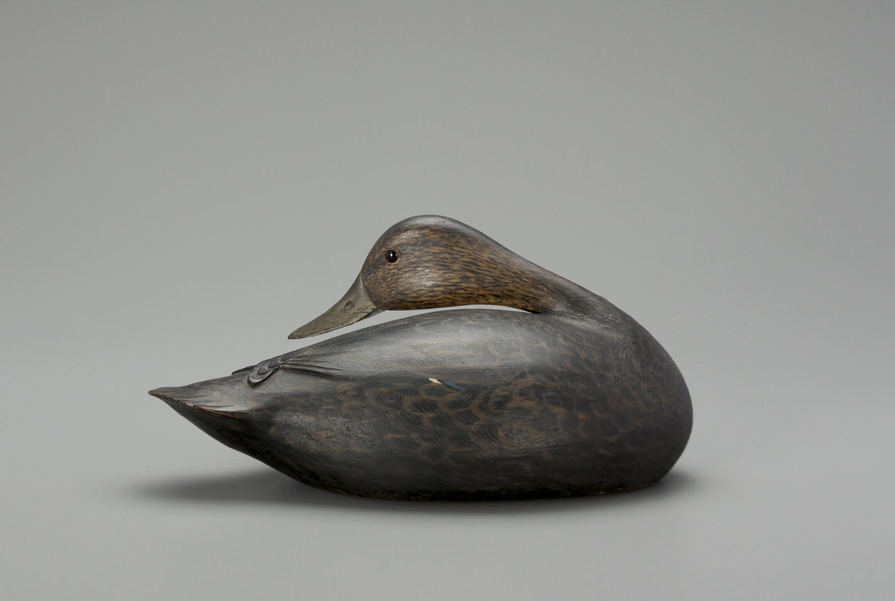 A Phillips rig preening black duck decoy, carved circa 1912 by A. Elmer Crowell for his patron, Dr. John C. Phillips.