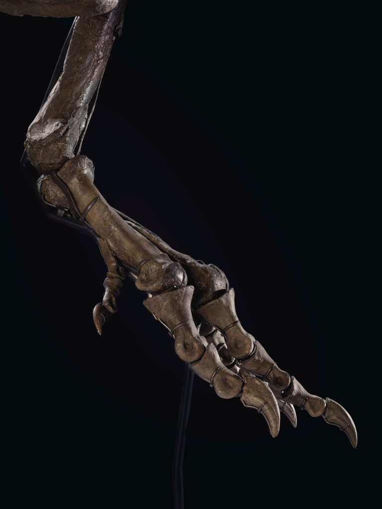 Christie's mounted STAN's skeletal feet in a position that imitates that of an ostrich.